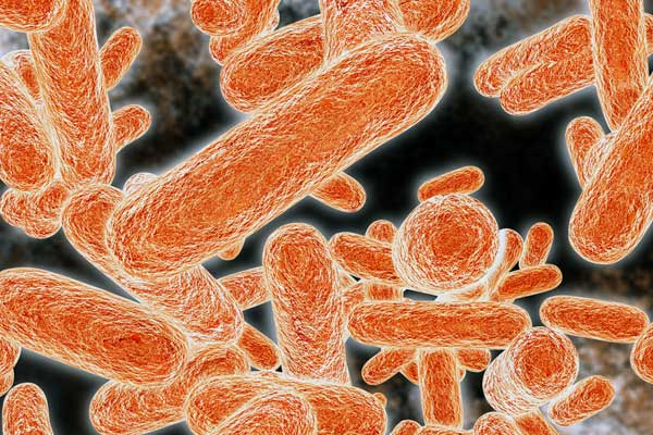 Infectious bacteria or superbugs that don't respond to antibiotics kill an estimated 23,000 people in the U.S. each year (image by Shutterstock)