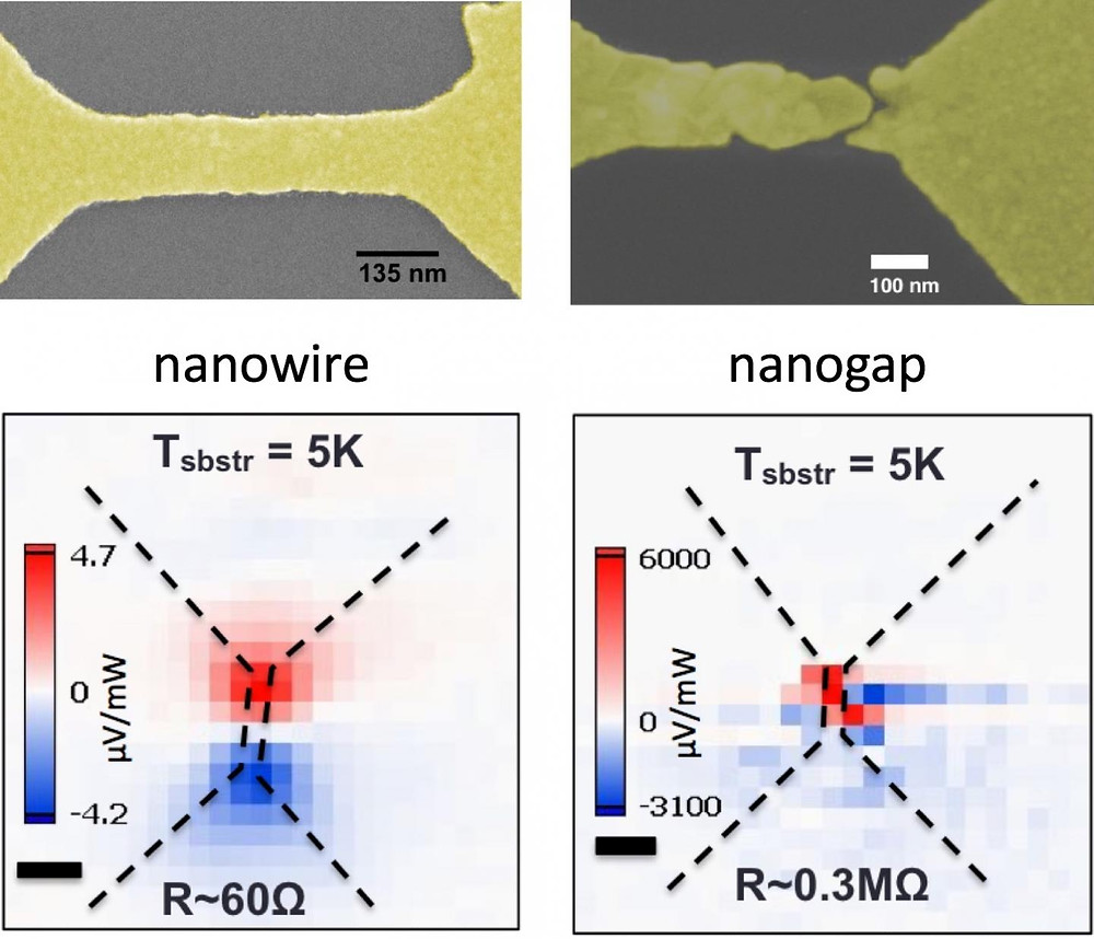 Rice University scientists discovered that 'hot' electrons can create a photovoltage about a thousand times larger than ordinary temperature differences in nanoscale gaps in gold wires. On the left, a laser-heated, bowtie-shaped plasmonic gold nanowire created a small voltage in the wire. On the right, a gold nanowire with a nanogap under the same light source showed a much stronger voltage at the break. @ Natelson Group/Rice University