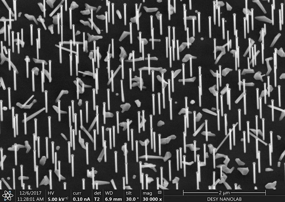 Nanoforest: Nanowires on a silicon wafer as recorded at the DESY NanoLab.  @ DESY, Satishkumar Kulkarni/Thomas Keller