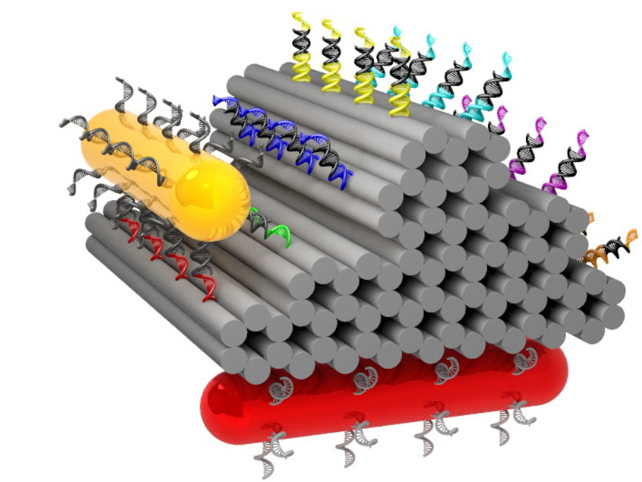 A gold cylinder with DNA feet can climb over DNA-primed hills made from folded DNA strands. The second cylinder (red) serves as a point of reference for observing the nanowalker. © MPI for Intelligent Systems, Stuttgart