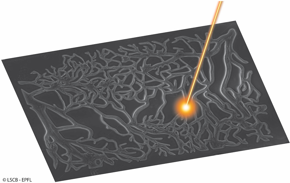 Fabrication of microfluidic networks in biocompatible gels using pulsed lasers @ Matthias Lütolf, EPFL