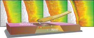 Nanoscale imaging in liquids is critical for understanding key electrochemical processes and the design of rechargeable batteries. A novel approach using a combination of microwaves, a scanning probe and ultrathin membranes avoids the radiation damage caused by imaging methods employing highly energetic X-ray and electron beams. Image credit: Oak Ridge National Laboratory, U.S. Dept. of Energy. Image by Alexander Tselev and Andrei Kolmakov
