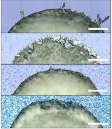 Graphene additives show a new way to control the structure of organic crystals