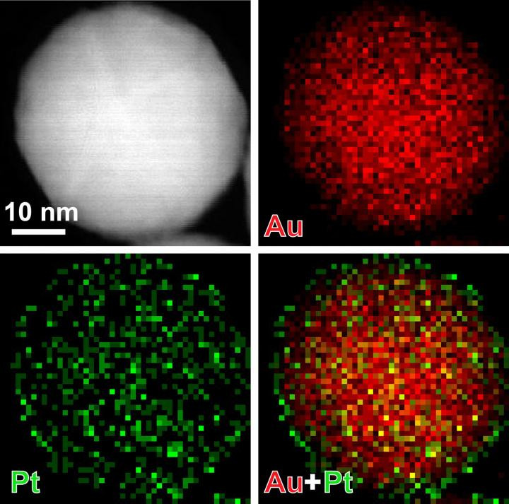 By coating gold nanoparticles in thin layers of platinum, only a few atoms thick, Xiaohu Xia's team was able to increase the sensitivity of test strips that detect prostate-specific antigen (PSA). @ Xiaohu Xia/Michigan Tech