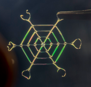 A bio-inspired web made of silk nano fibers, 2 to 3 cm in width. (Credit: Silk Lab Tufts University)