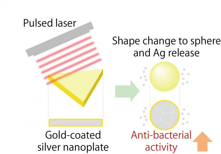 When gold-coated silver nanoplates are irradiated with a pulsed laser, they change shape into a sphere and release silver ions which produces a strong antibacterial effect. @ Dr. Takuro Niidome