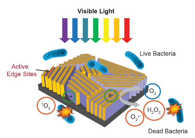 """This nanostructured device, about half the size of a postage stamp, uses sunlight to quickly disinfect water. It consists of thin flakes of molybdenum disulfide arranged like walls on a glass surface and topped with a thin layer of copper. Light falling on the walls triggers formation of hydrogen peroxide (H2O2) and other """"reactive oxygen species"""" that kill bacteria. (C. Liu et al., Nature Nanotechnology)"""