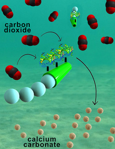 Nanoengineers have invented tiny tube-shaped micromotors that zoom around in water and efficiently remove carbon dioxide. The surfaces of the micromotors are functionalized with the enzyme carbonic anhydrase, which enables the motors to help rapidly convert carbon dioxide to calcium carbonate. Image credit: Laboratory for Nanobioelectronics, UC San Diego Jacobs School of Engineering.