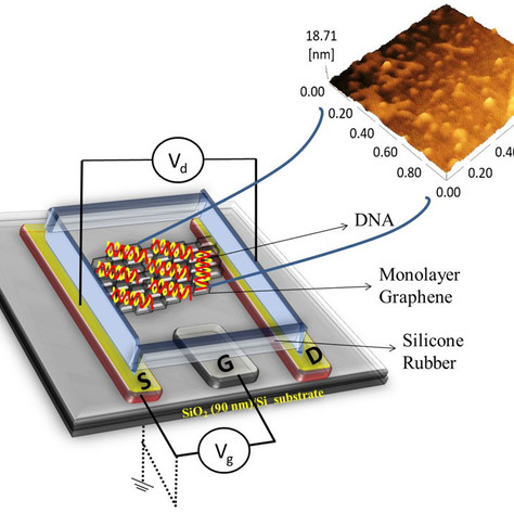 Improving DNA-detecting transistors using graphene