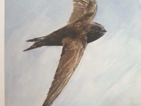 A WEEK WITH THE SKY... swifts!!