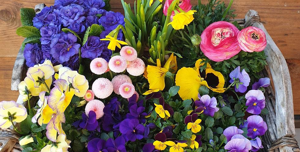 Frühlingsmischung