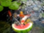 Exotic Pond & Water Garden Design in Greensboro NC   Pond Professors