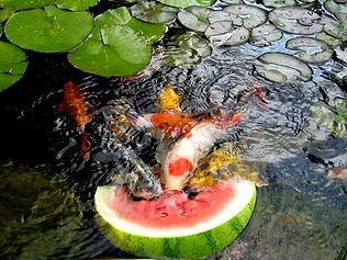 Exotic Pond & Water Garden Design in Greensboro NC | Pond Professors