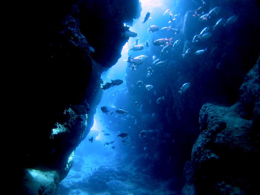 恩納村瀬底島万座青の洞窟ダイビング