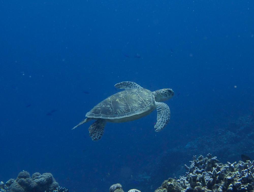 okinawa diving