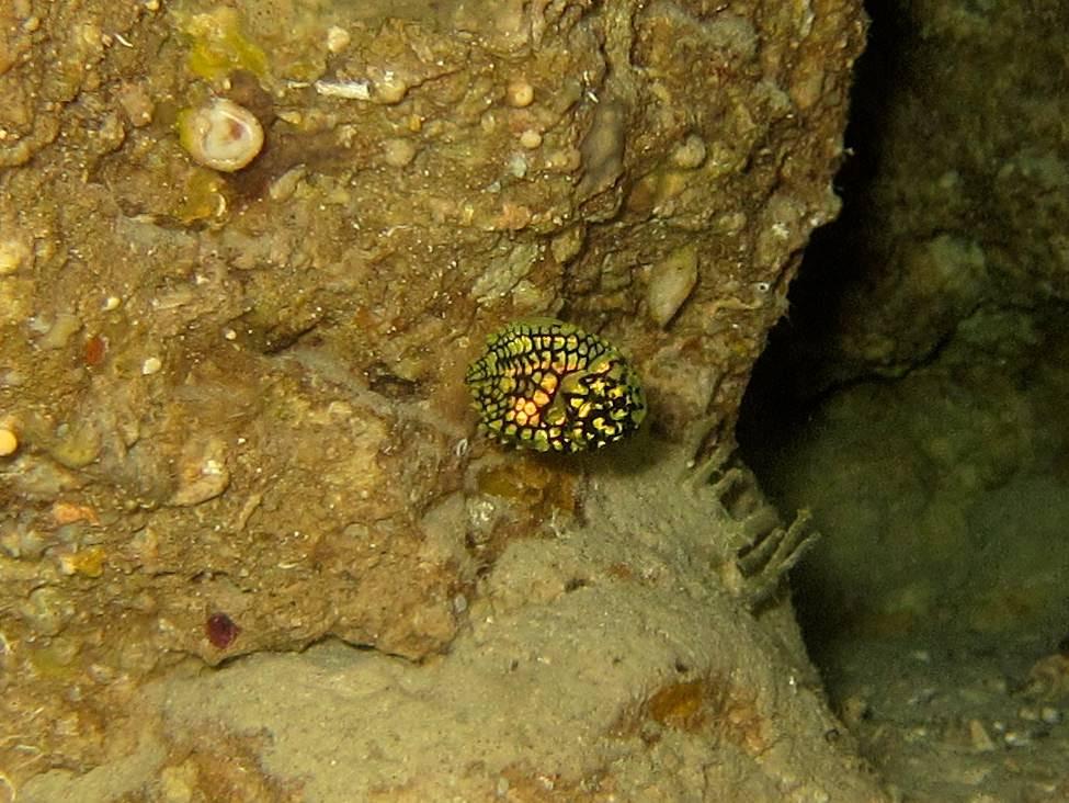 恩納村青の洞窟ファンダイビング