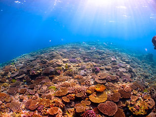 kerama islands corals
