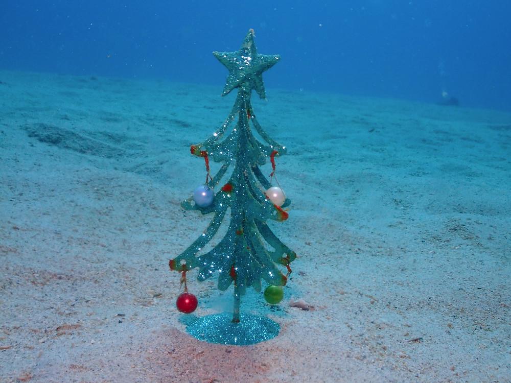 恩納村北部万座クリスマスダイビング