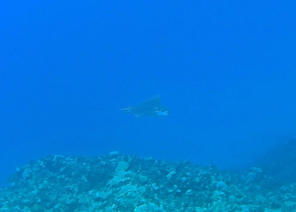 与論島ダイビングツアー