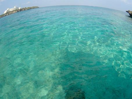 Happy dive in beautiful ocean !