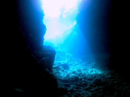 今年はステップアップ、水中世界にいらっしゃい