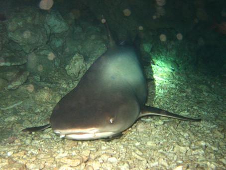 サメに大接近