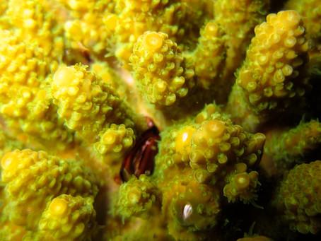 普段の海とは違う表情を見せるナイトダイビングとサンゴの産卵チェック