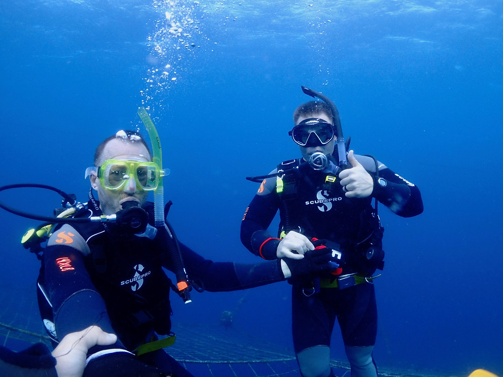 恩納村青の洞窟ジンベエ体験ダイビングファンダイビング