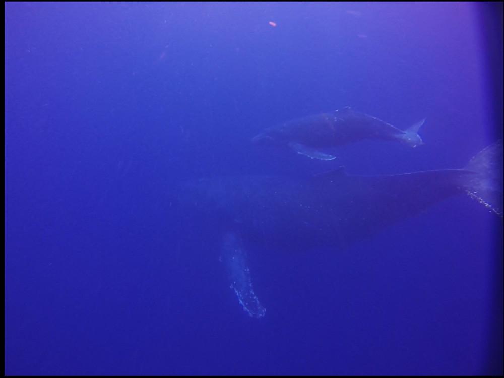 Whale swim ホエールスイム