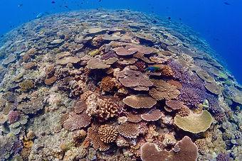 minna island corals