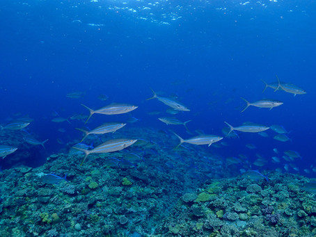 Shoal of fishes !
