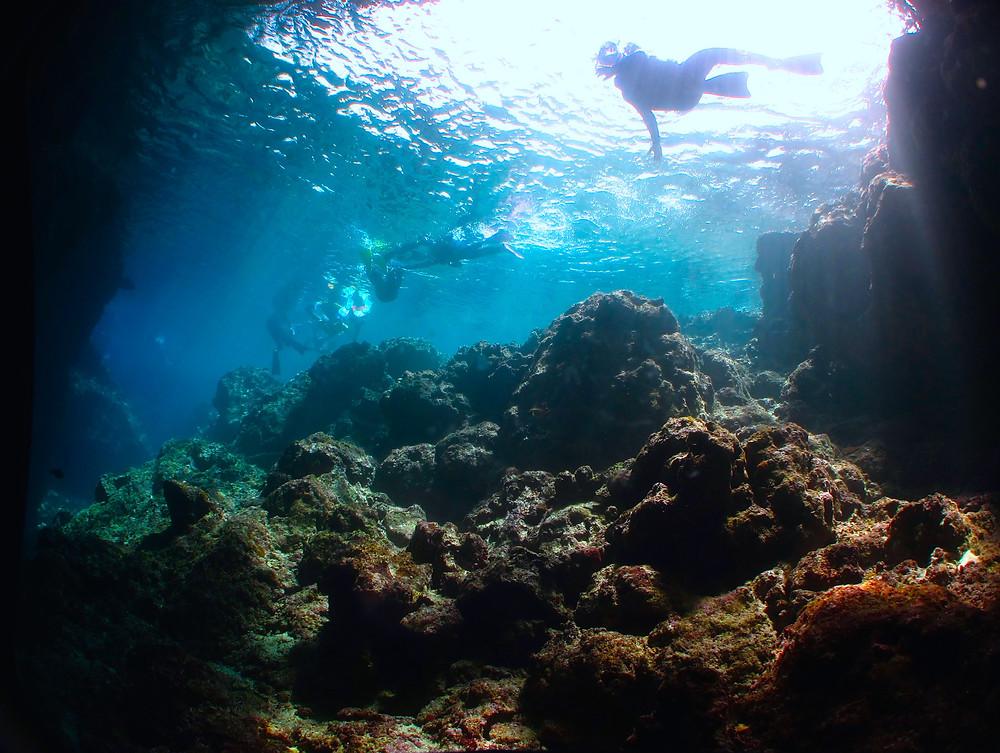 恩納村ジンベエザメ体験ダイビングシュノーケリング青の洞窟