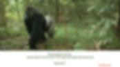 Banking Biodiversity.png