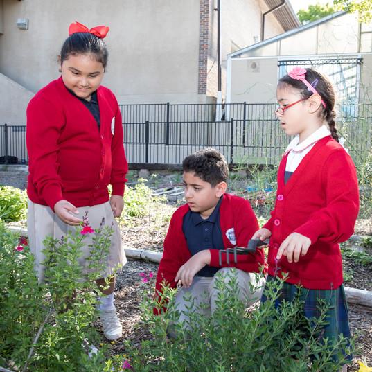Grade School Garden.jpg