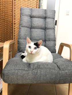 椅子の上のこじろう