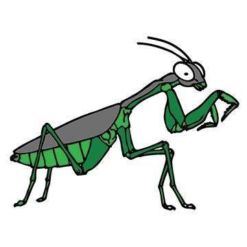Pest Control Consultation