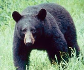'Tis the Season for Bears!
