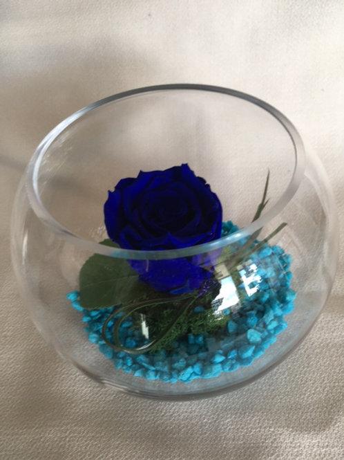 Rose éternelle bleue en bulle
