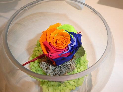 Rose éternelle multicolore en bulle