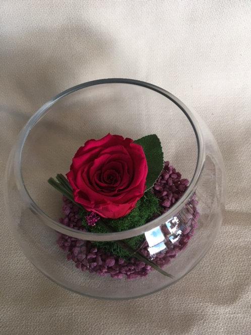 Rose éternelle rouge en bulle