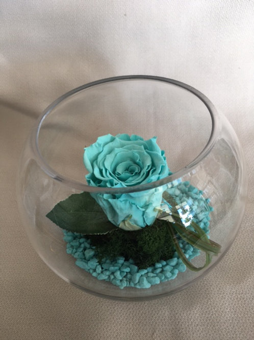 Rose éternelle turquoise  en bulle