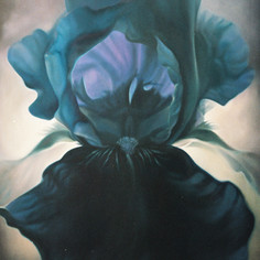Black Iris