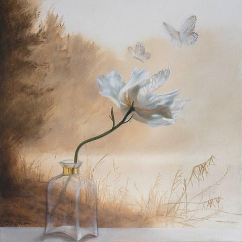 'Transforming' (Butterflies) 2017