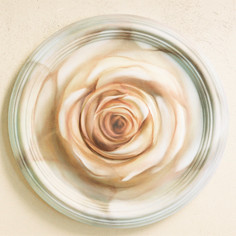 DETAIL 3 : Heart Rose Installation