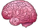 brain trp.JPG