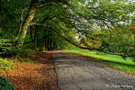 Bielefeld im Herbst (25 von 31).jpg