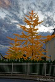 Bielefeld im Herbst (31 von 31).jpg
