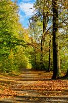Bielefeld im Herbst (26 von 31).jpg