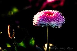 Botanischer Garten-11