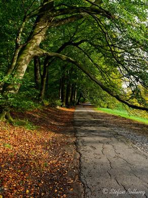 Bielefeld im Herbst (24 von 31).jpg